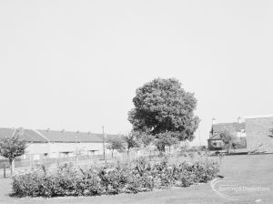 Rose Lane, Marks Gate, with lawn, rose bed and tree, and houses in background, 1971