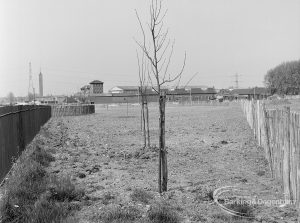 Old Barking landscaping, showing freshly planted trees, 1972