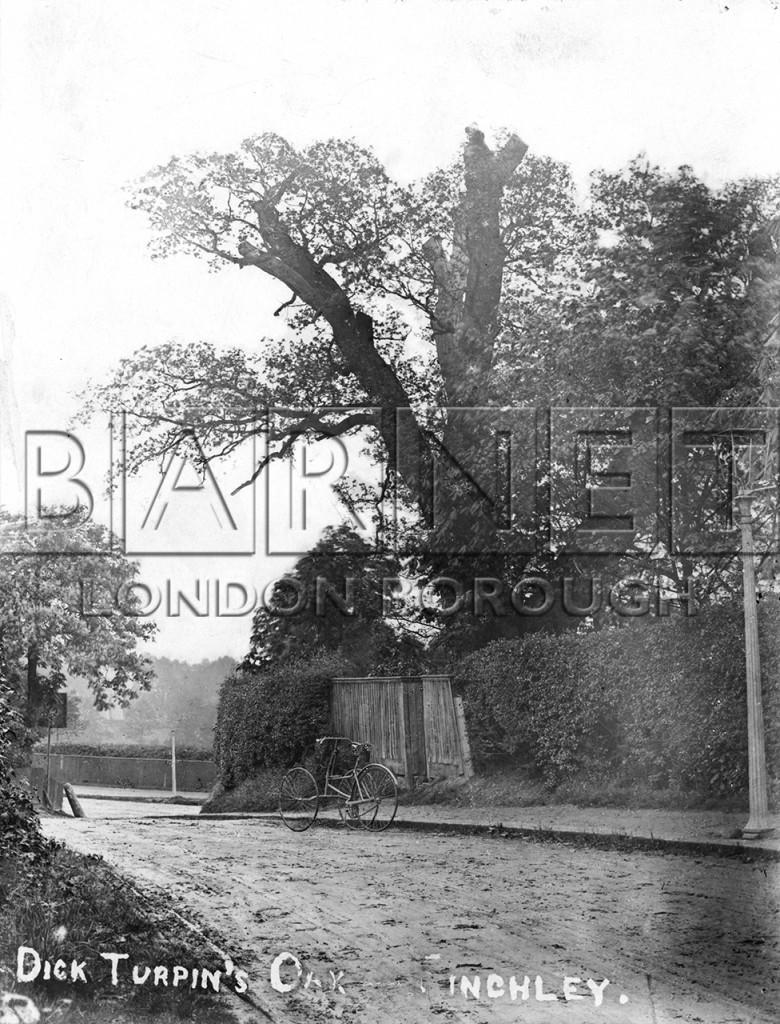1900  Turpins Oak