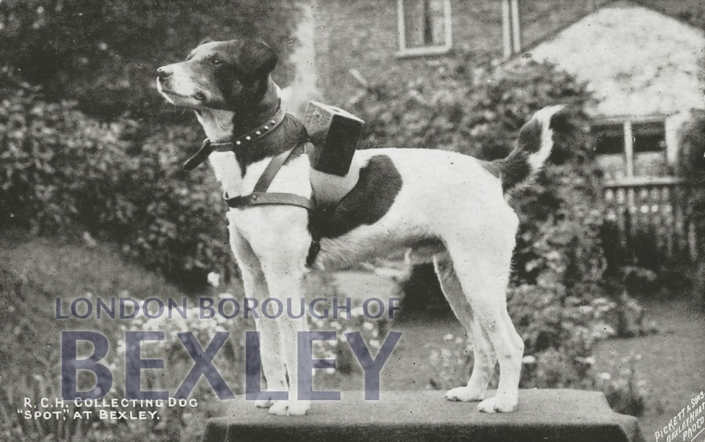 R.C.H. Collecting Dog 'Spot' at Bexley c.1909