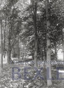 PHBOS_2_94 Upton Lane (now Road), river Shuttle Bridge c1900