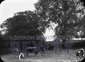 PHBOS_2_548 Kelsey's Farm, Bexley 1892