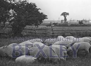 PHBOS_2_584 Bexley fields behind railway station c1900