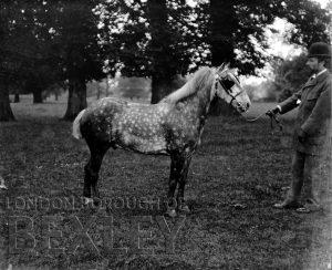 DEW120 Gentleman with a Pony c.1900