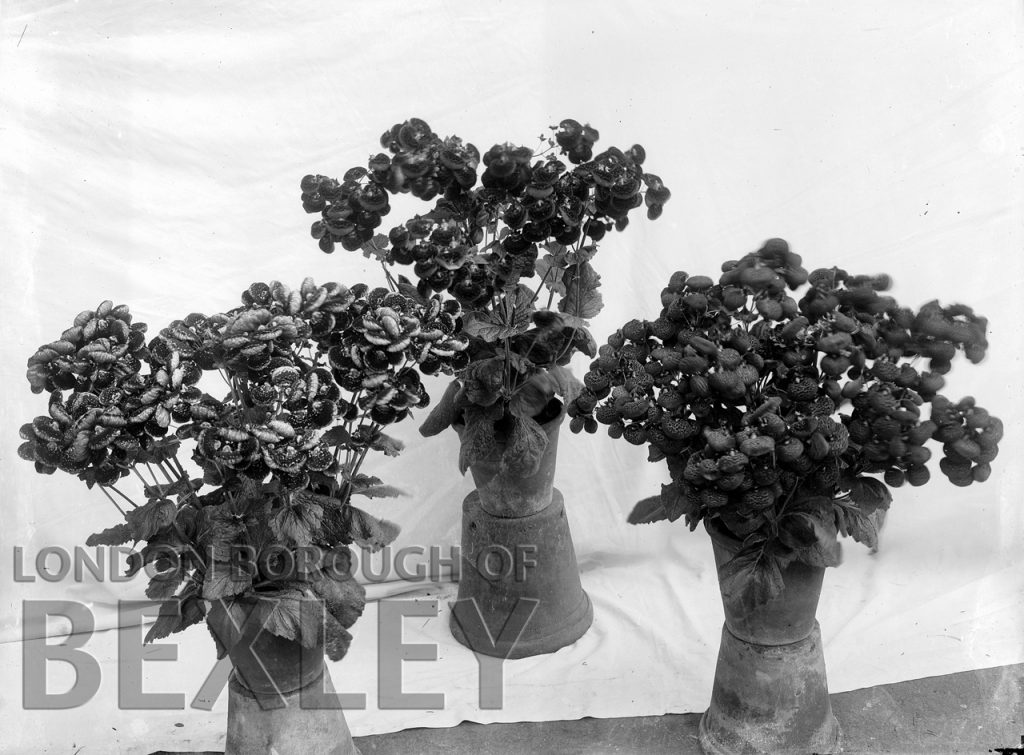 Flower Display at Sidcup & District Horticultural Show 1898