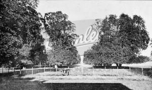Avenue of trees in Langley, Beckenham