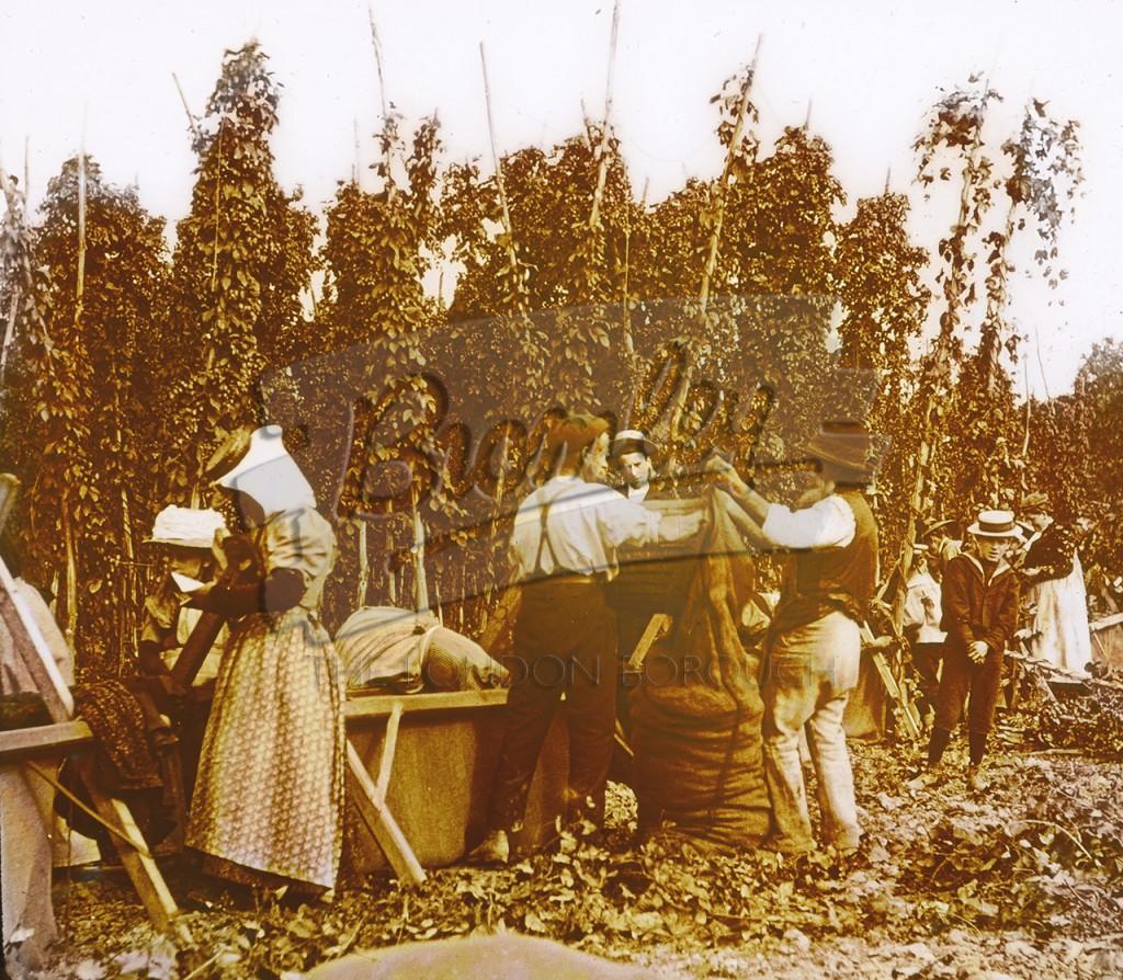 Hop picking at Knoll, Orpington, Orpington 1900s