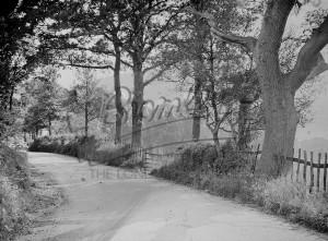 Waldons Road, St Mary Cray, St Mary Cray