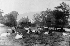 Kelsey Park Farm, Beckenham, c.1910