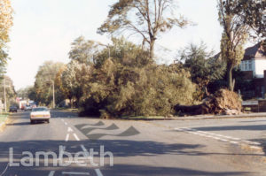 DAMAGED TREES, KINGS AVENUE, BALHAM