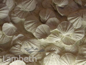 FOSSILIZED SHELLS, FESTIVAL HALL, SOUTH BANK