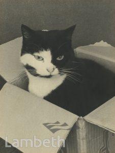 CAT PORTRAIT BY HARRY JACOBS