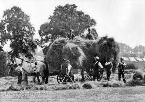 Haymaking In The Field Opposite St Hilda's Church, Brockley