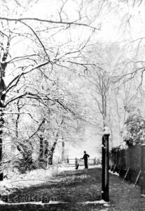 Redberry Grove Sydenham in Snow