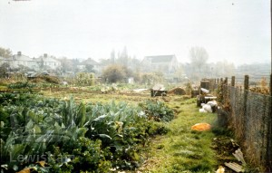 Allotments between Baring Road and the Railway
