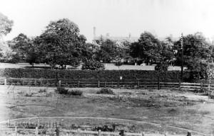 Ladywell Fields Looking Towards Rear Of Lewisham Hospital