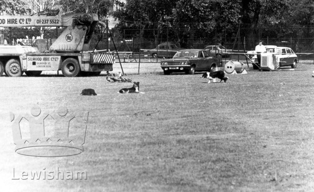 Ladywell Fields Sheepdog Trials 2