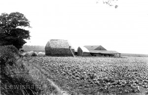 Bellingham Farm.