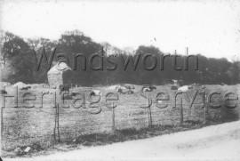 Wimbledon Park Road- 1909